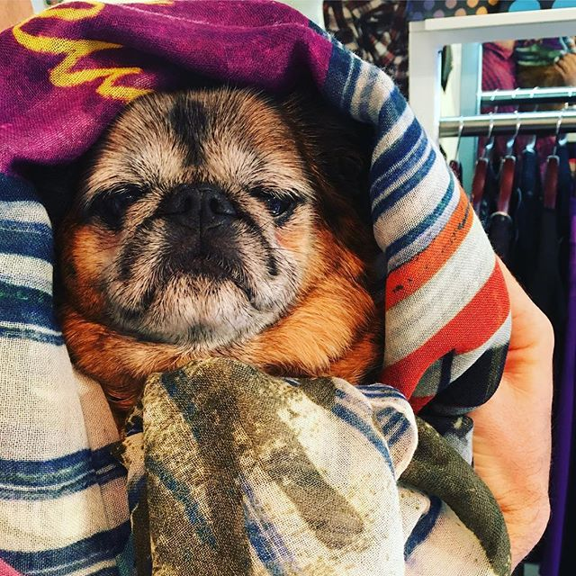 Our favourite neighbour Buddy, looking fab in a Westwood Mirror the world scarf in store now at Pour Tous  Shop our insta- link in our bio #10786