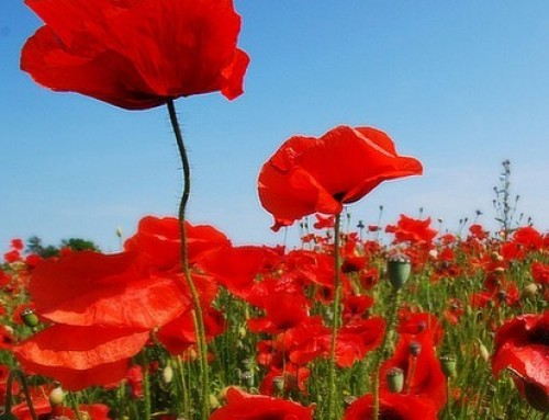 We will be closed today for Anzac Day. Lest we forget.